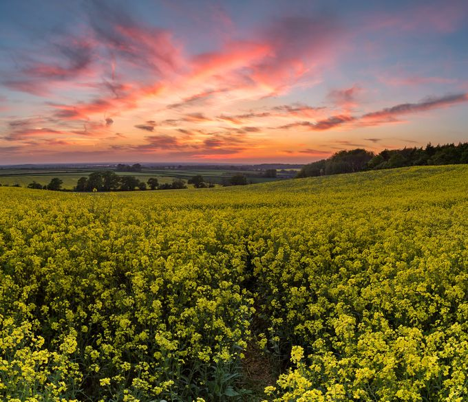 Fields of Gold II by SteffenE - Rural Vistas Photo Contest