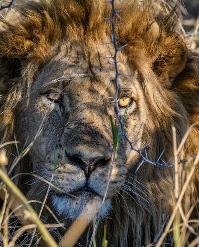 King of Botswana