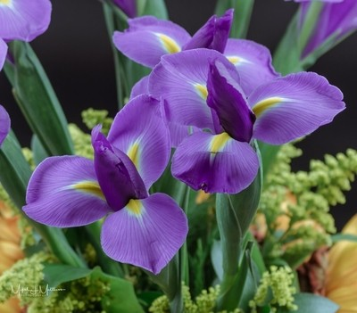 Iris's from our anniversary bouquet.