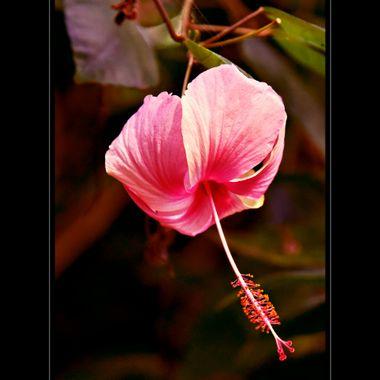 Lovely hanging pink flower.
