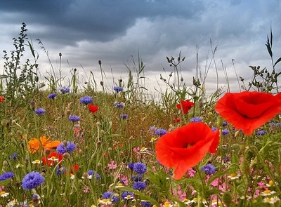 Wildflowers against Grey Skies