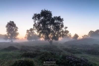Misty Twilight Path