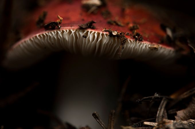 Avoid by shannondizmang - Mushrooms Photo Contest