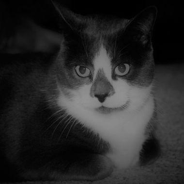 aprils cat (2)