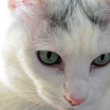 judes  cat