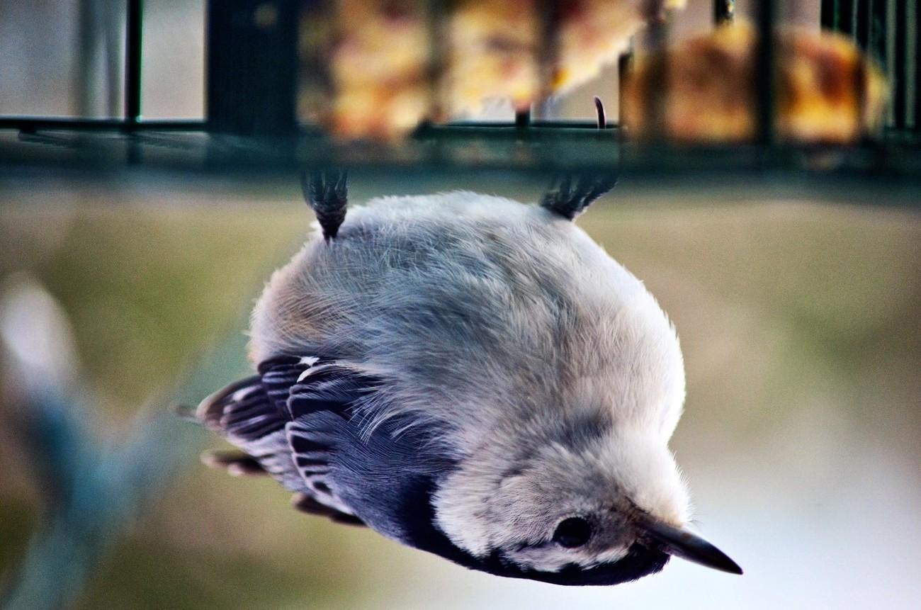 down upside