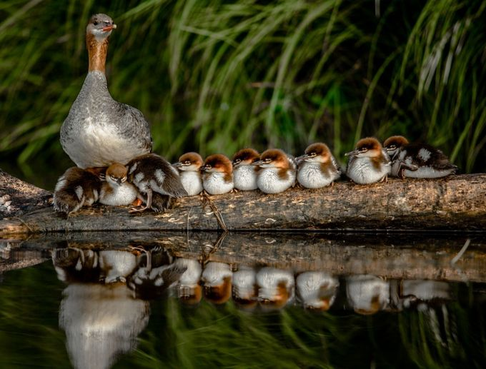Full House by BonZeye - Animals And Water Photo Contest