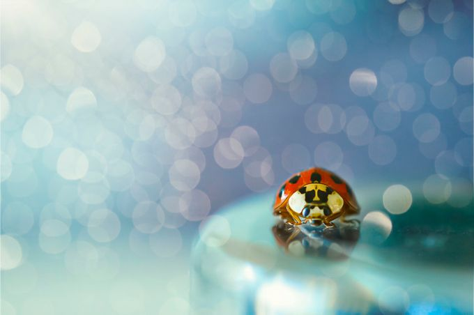 Dreamy bug by Ledopix - Colorful And Bright Photo Contest