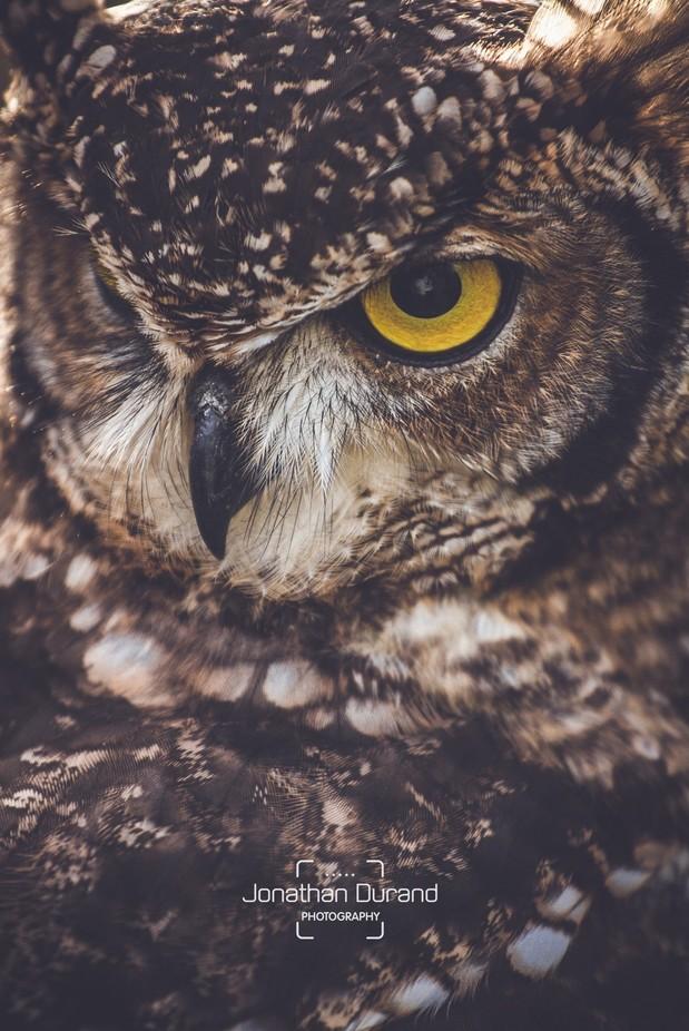 Deep thought by JonathanDurandPhoto - Beautiful Owls Photo Contest