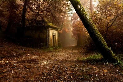 The enchanted trail