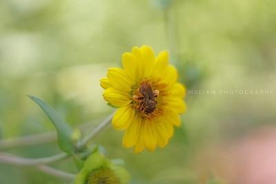 Gorgeous Yellow flower