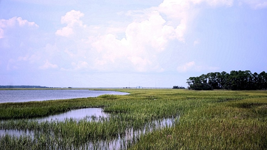 Wet Lands on Hunting Island