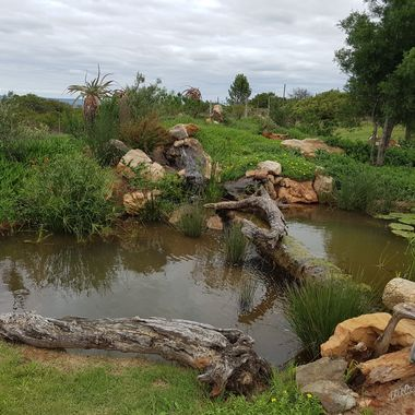 Photo of a water feature I designed and established at Founders Game Lodge. The landscaping and feature are all made made.