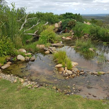 The water feature I designed and established at Founders Game Lodge 9 Months later.
