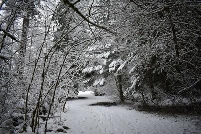 Hidden Snow