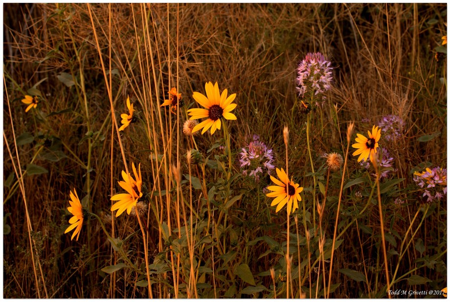 Roadside Flowers