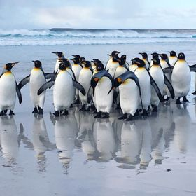 Picture taken in the Falkland Islands
