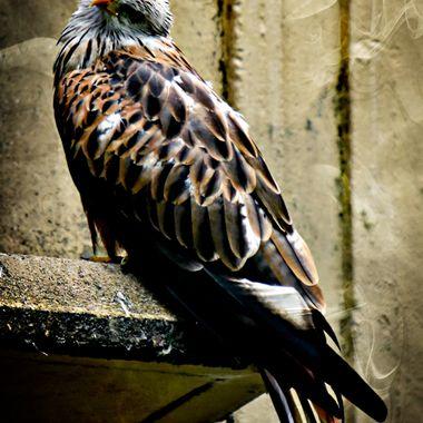 Posing Eagle!