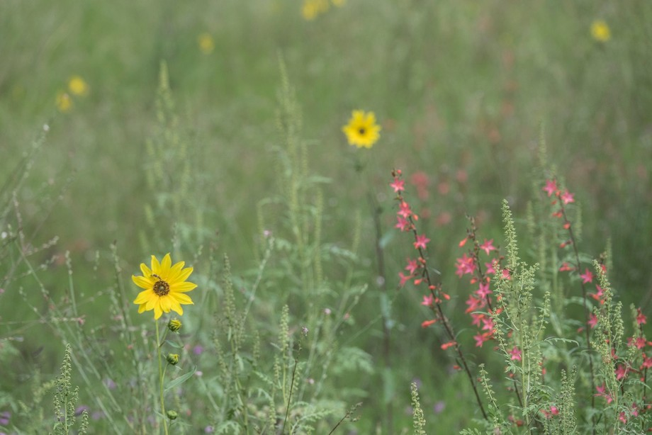 the wildflowers field in the summer of northern Arizona