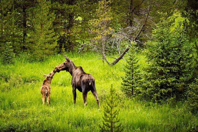 Mom's Kiss by cassandrajcameron - Wildlife Photo Contest 2017