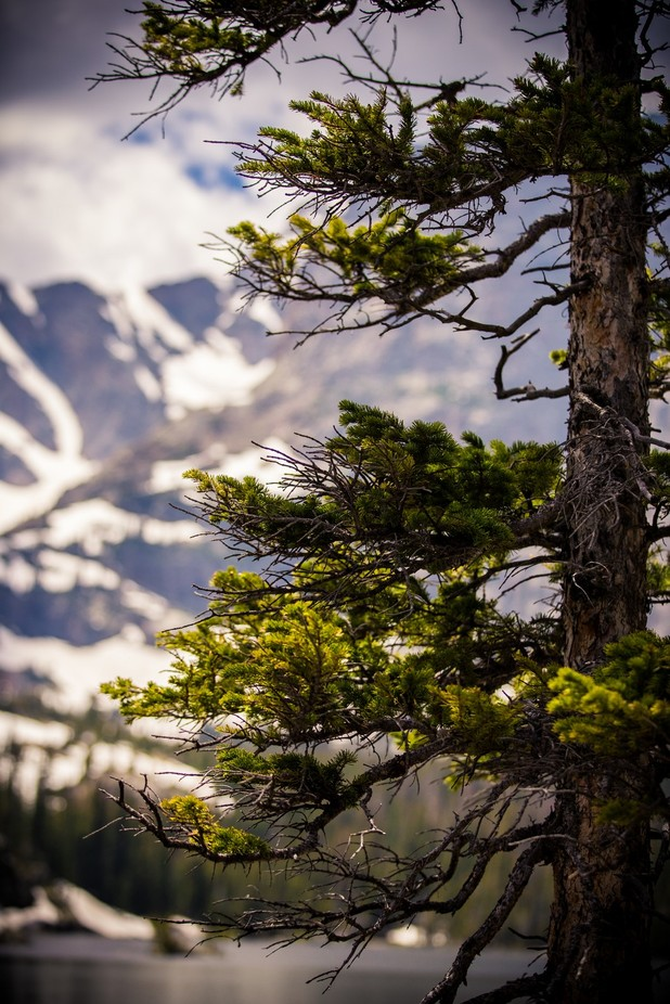 Rocky Mountain Vibes by wileskws - Depth In Nature Photo Contest