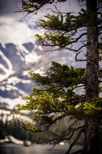 Rocky Mountain Vibes