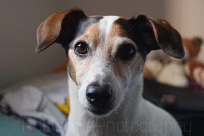 Phooey, Family Dog.