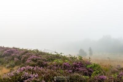 Misty Heather