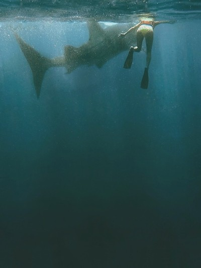 Reminiscing when I traveled solo to an island in Mexico, then took a boat 30 miles into the deep waters of the Caribbean Sea to cross something off my bucket list (2 days in a row): Swimming with whale sharks.