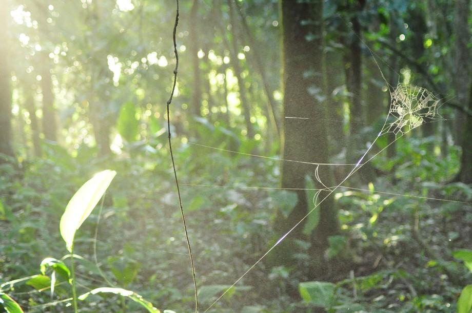 Tarantula territory
