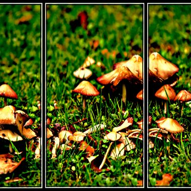 Wild growing mushrooms at the zoo.