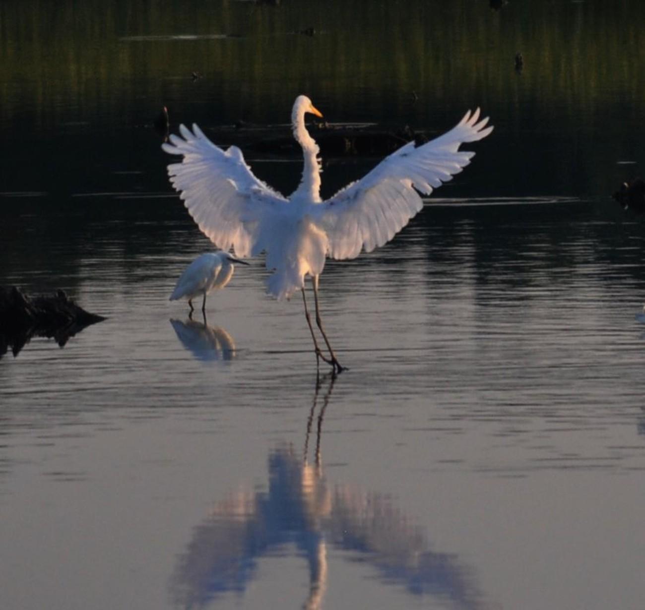 Bombay Hook National Wildlife Refuge Smyrna, Delaware Liepsic River,, Blackbear Swamp,