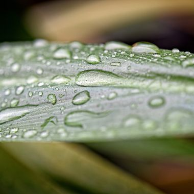 Water Droplets (2)