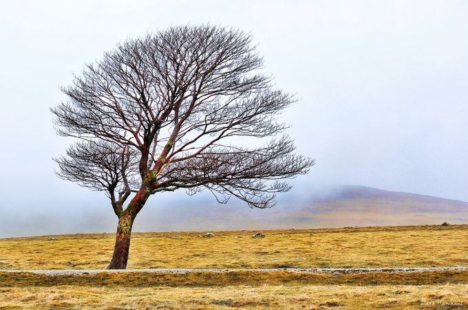 Lonely Tree by phantomsailer - A Lonely Tree Photo Contest