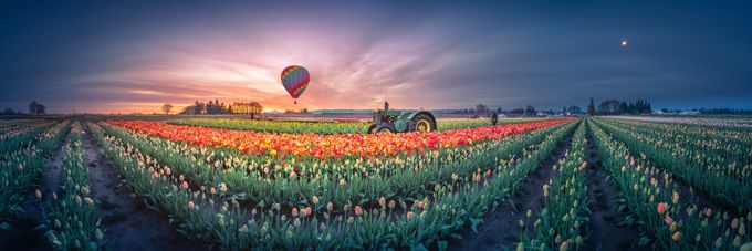 Sunrise, hot air balloon and moon over the tulip field by Freebilly - Show Balloons Photo Contest