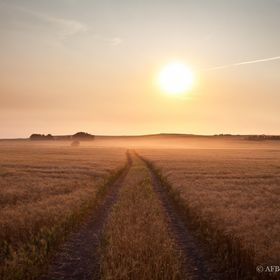 One of the best times of the year is harvest time. The setting sun coupled with the dust from the harvesters make for some really beautiful light...