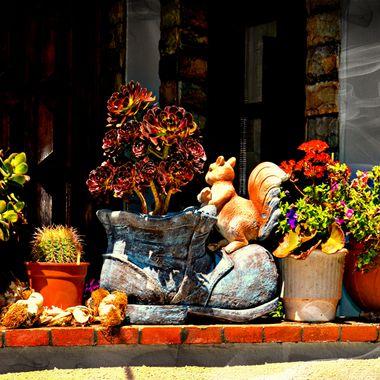 Old boot and plants in Kokkari samos.