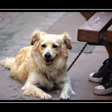Dog with a lovely grin in Samos Town.