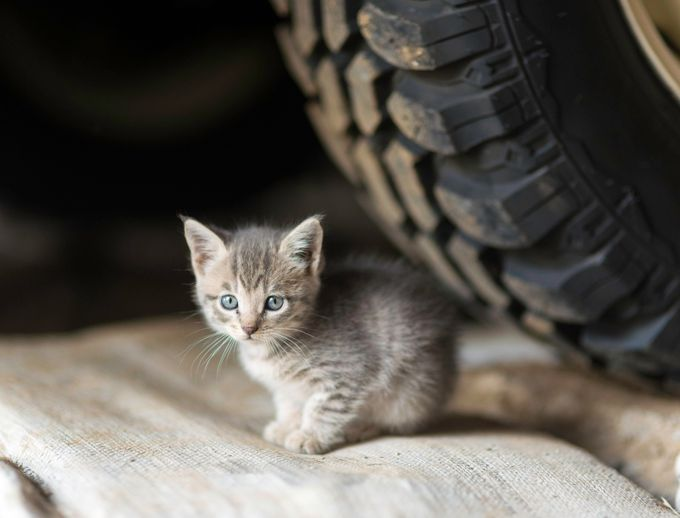 gatos del taller  by annetteflottwell - Cute Kittens Photo Contest