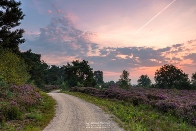 Cloudy Sunrise Heather Path