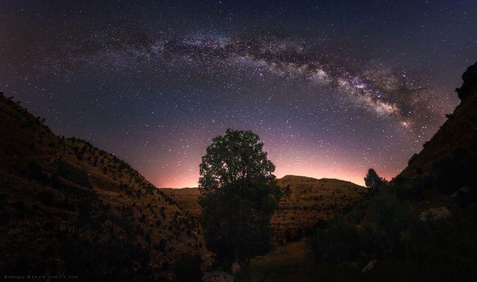 Tree Of Life by Rodrigueelhajj - Capture The Milky Way Photo Contest
