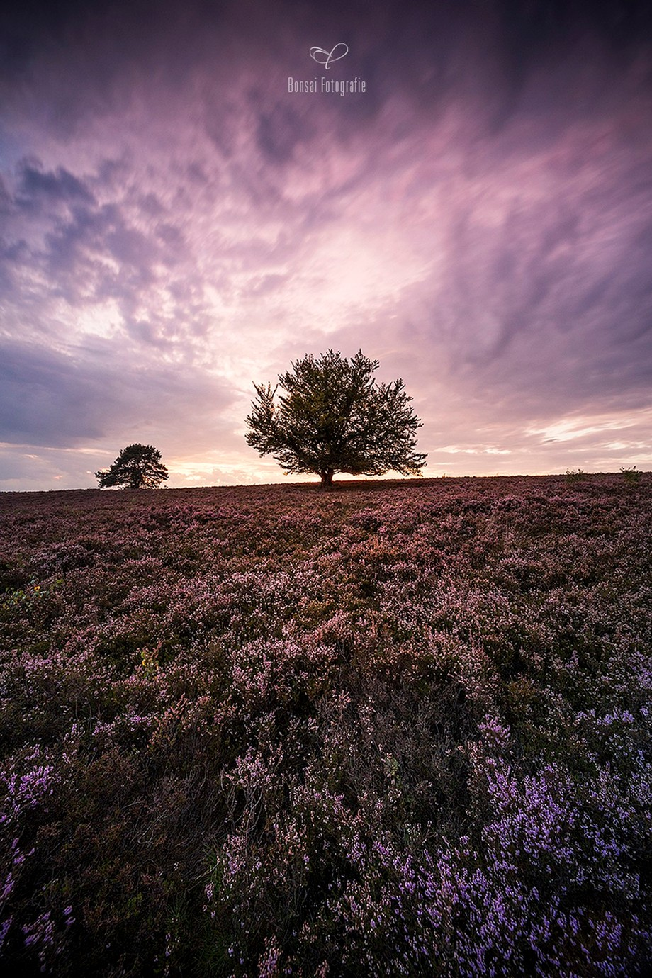 »Purple all over« by BonsaiFotografie - Covers Photo Contest Vol 41