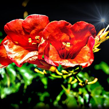 Beautiful red flowers and beam of light.