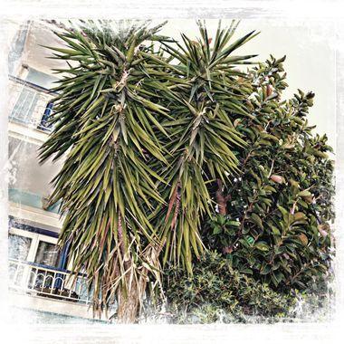 Palm tree & Bush in Pithagorio.