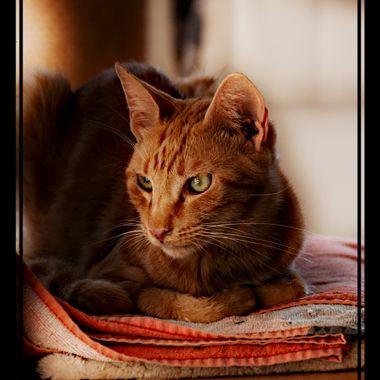 Beautiful Ginger cat, Samos Greece.