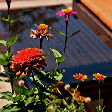 Flowers in full bloom.