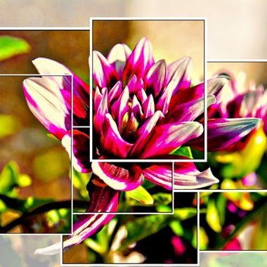 Flower in multi frame.