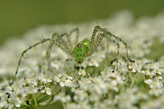 Spider 1 by matthewgilliam - Macro Photo Contest limited series