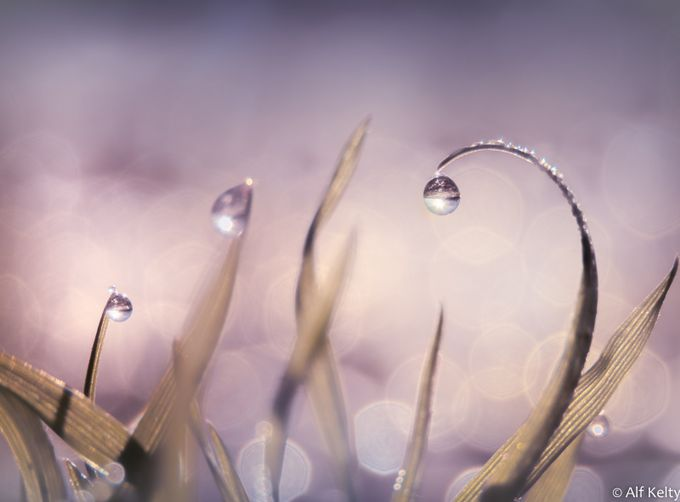 ~ Drops Of Light ~ by alfkelty - Macro Water Drops Photo Contest