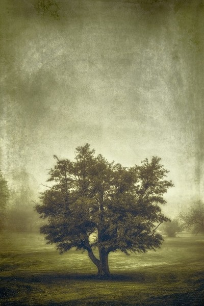 A Tree in the Fog 2